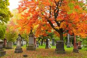 Victoria, Funeral Notices 1981-1997 | findmypast com